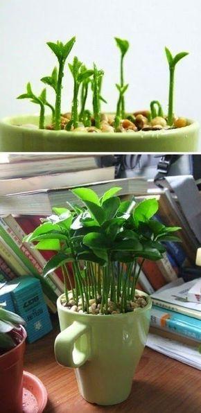 DIY: 10 Ziemlich freie Pflanzen für das Haus. UPcycling, Be Green sein, Home Sweet Home, Anleitung, Inneneinrichtung, Gartenarbeit, Topf, Pflanze, Wachsen, Samen, Pflanze, Samen  – lul agloss